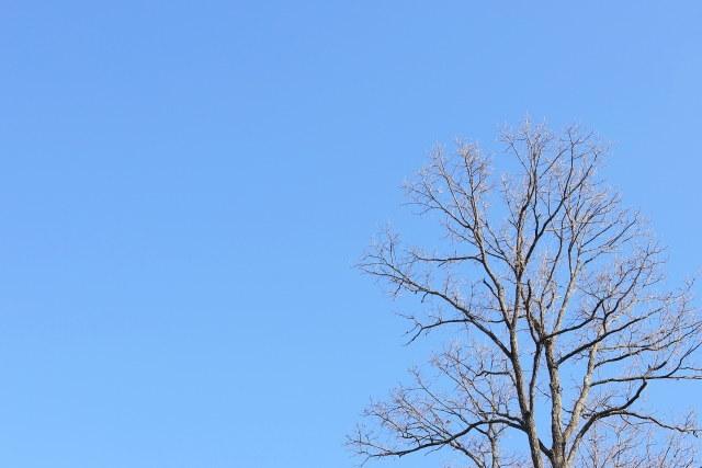 冬 晴れ 空