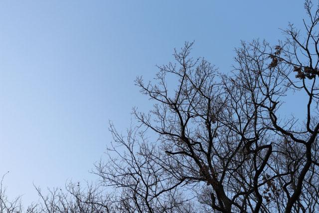 冬 晴れ 空 乾燥