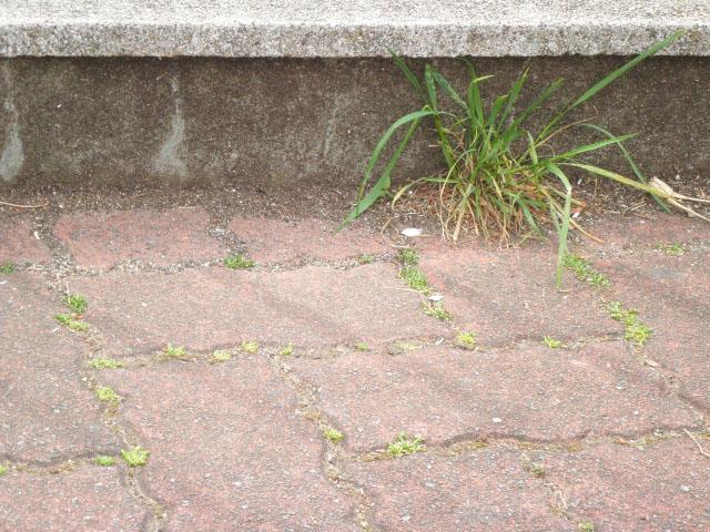 歩道 草 雑草