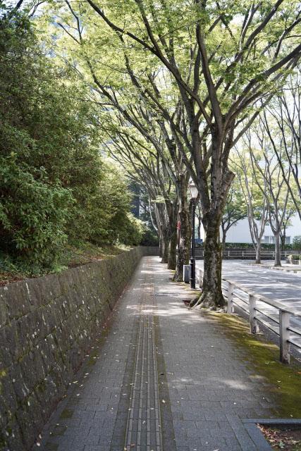 横道 散歩 ウォーキング